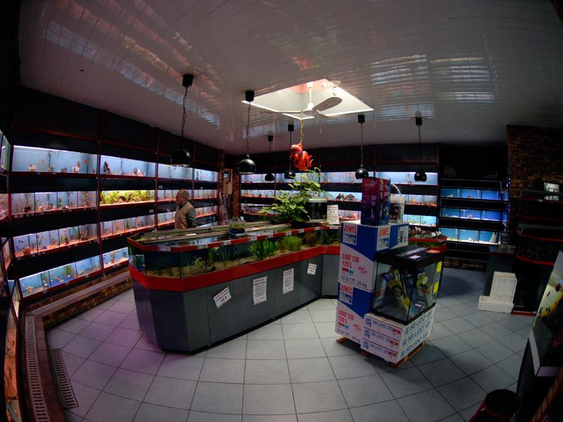 Notre magasin vente de plantes de poissons et mat riel for Poisson aquarium vente en ligne