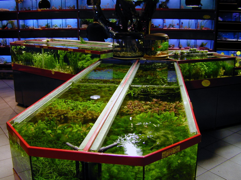 Notre magasin vente de plantes de poissons et mat riel for Vente aquarium poisson