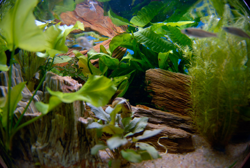 aux poissons exotiques plus de 30 ans d j au service de l 39 aquariophilie. Black Bedroom Furniture Sets. Home Design Ideas