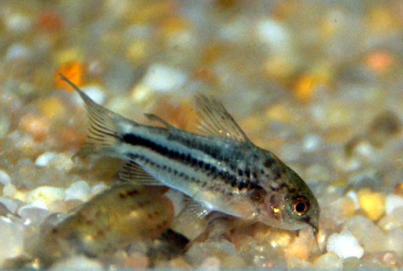 Poisson exotique aquarium images for Vente aquarium poisson