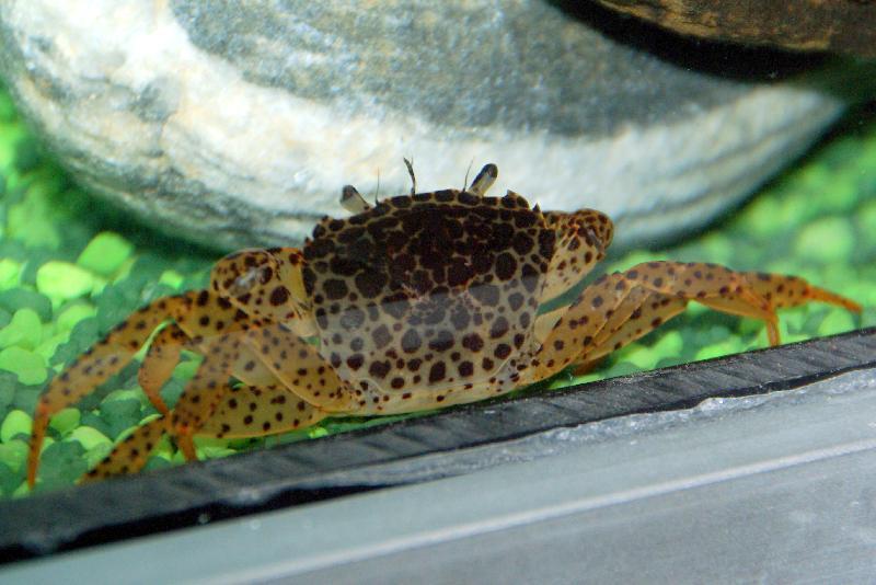 Crevette aquarium eau douce froide for Poisson aquarium eau douce froide