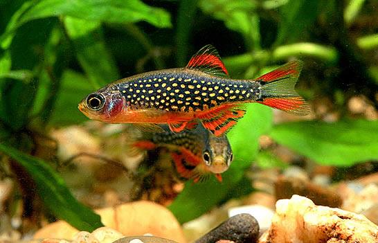 Poissons exotiques vente magasin uniquement nano for Vente aquarium poisson
